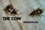 The Cow and The Hotplate, 2009